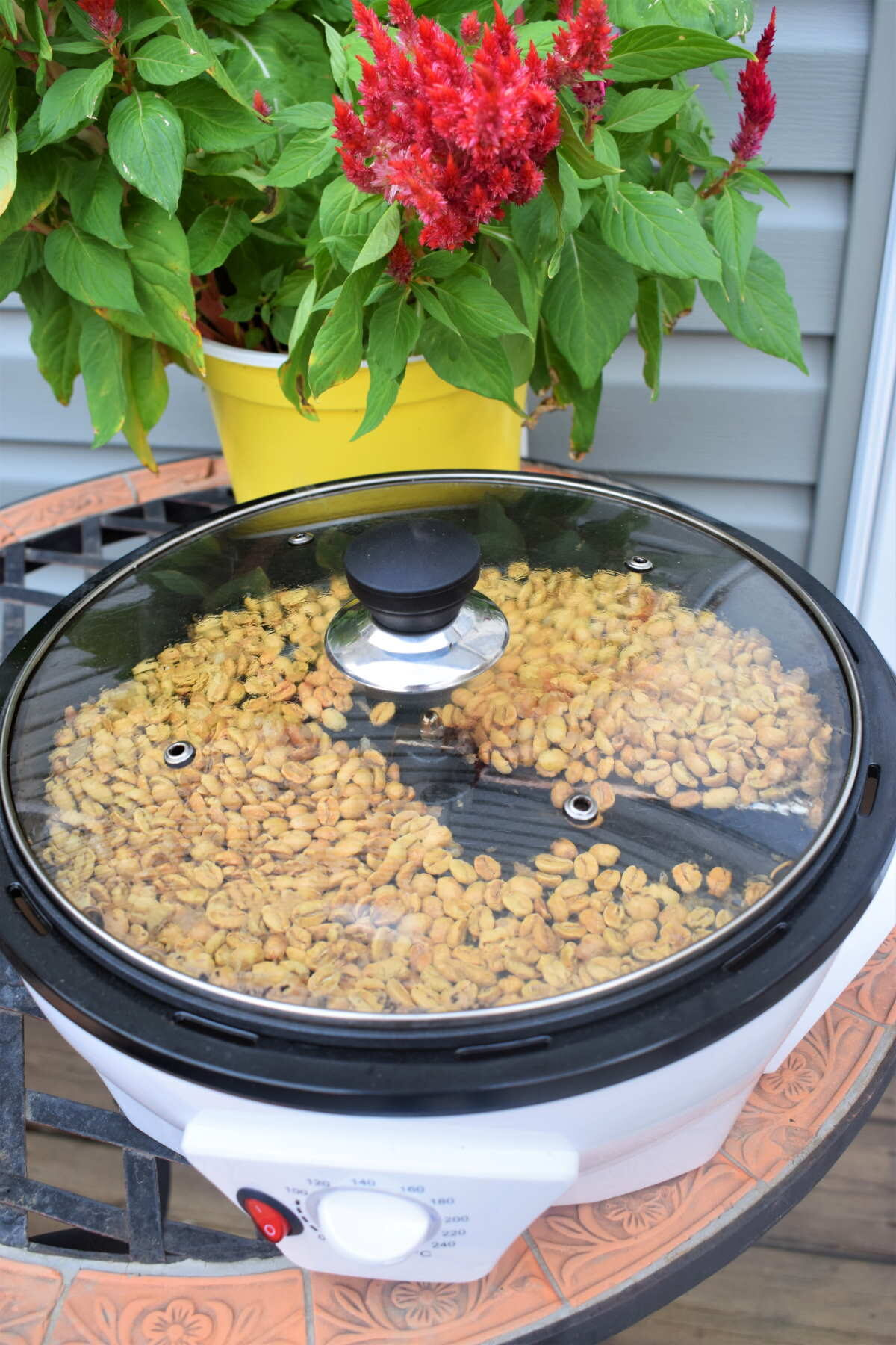 Coffee roaster with coffee beans, flower pot in the background.