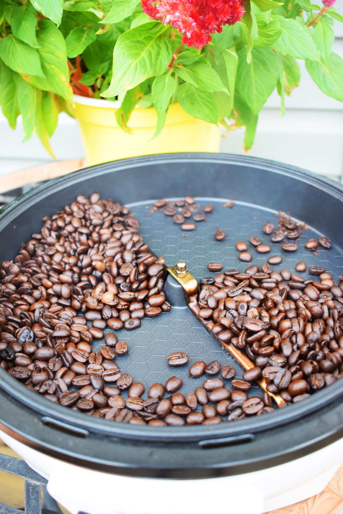 Open coffee roaster with dark coffee beans.